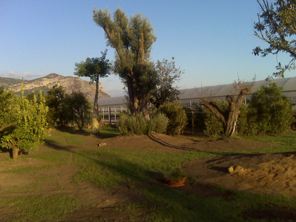 Giardino privato con biolago e ruscello a terracina lt for Progettazione giardini roma